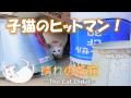 子猫のヒットマンがかわいい 14 - Kittens hitman is cute -